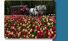 Celebrate Spring in Grand Style